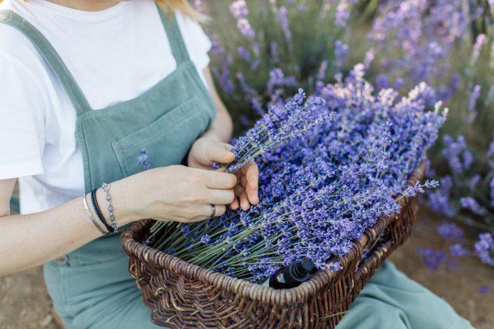 Lavender Spa Recipes