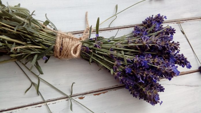 Growing Healing Herbs