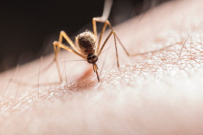 Ways to Eliminate Mosquitoes