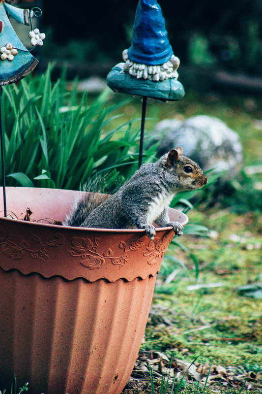How to Keep Critters Out of Your Garden Safely and Naturally