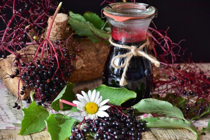 Elderberry - The Salutary Plant Used for Centuries