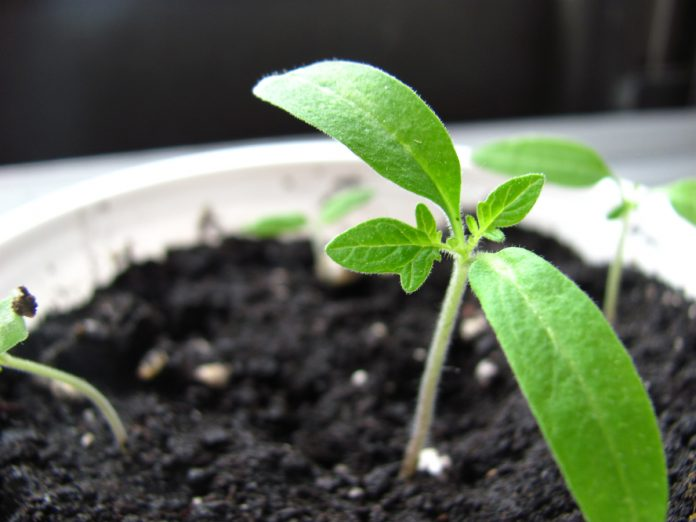 Invite Spring Early - Grow in Your Basement
