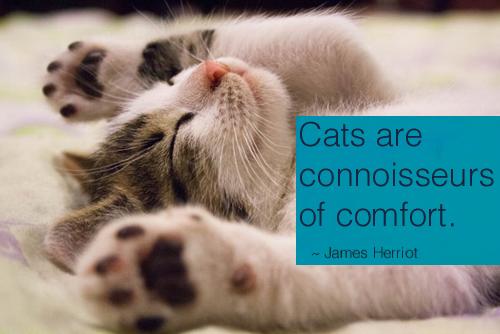 James Herriot Quotes