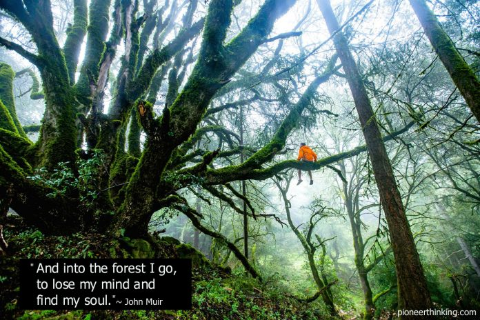 Into The Forest I Go - John Muir