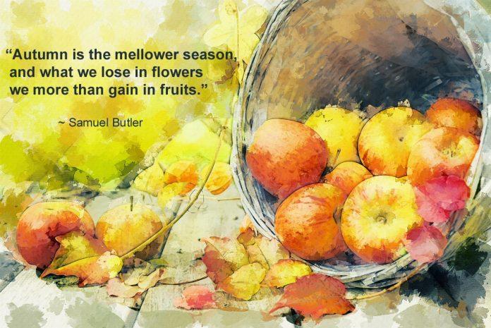 Autumn is The Mellower Season