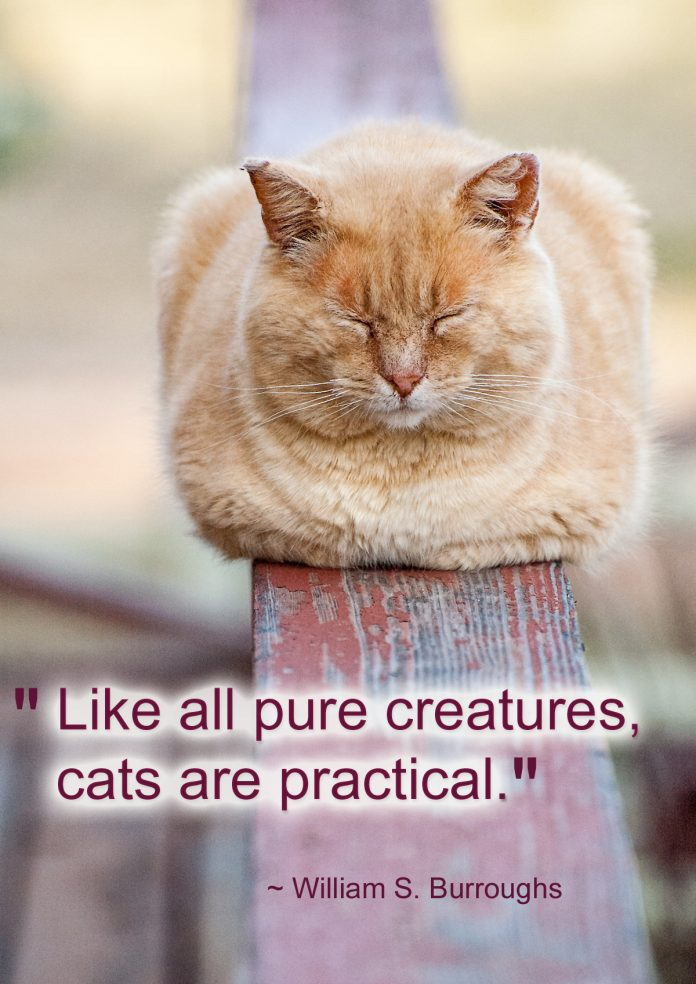 Cats are Practical - William S. Burroughs