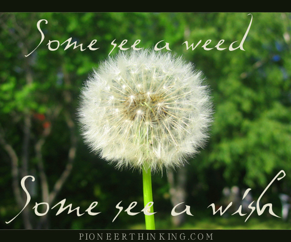 Some See a Weed