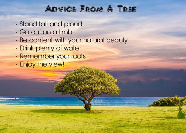 Advice from a Tree - Ilan Shamir