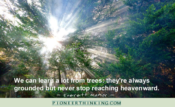 We Can Learn A Lot From Trees - Everett Mamor
