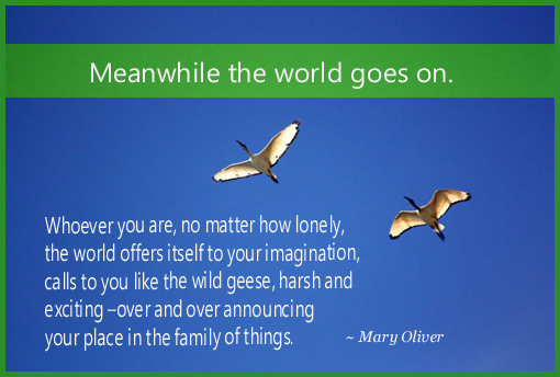 Meanwhile The World Goes On - Mary Oliver