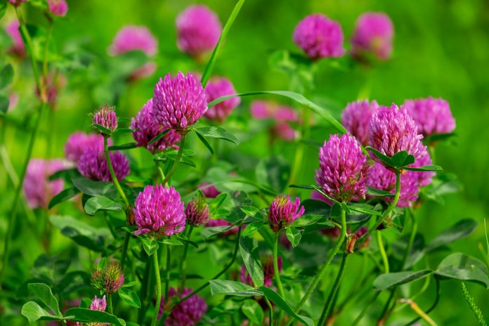 Best Herbs for Stress Relief