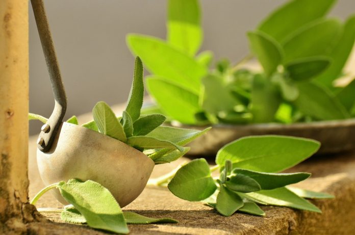 Sage Leaf Tea Anxiety Herbs