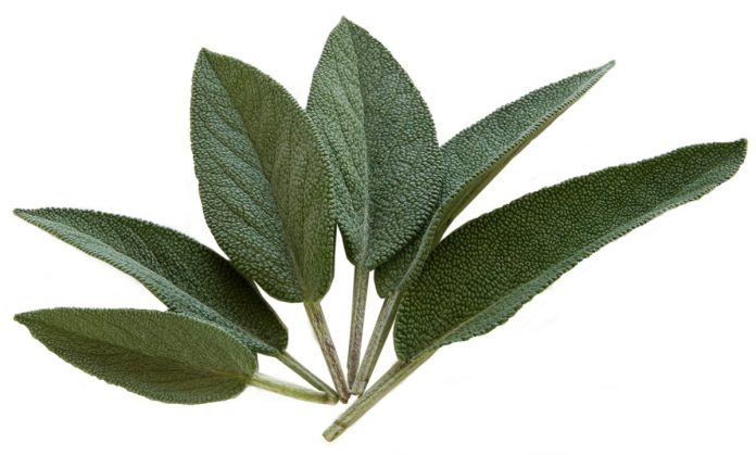 Ways to Preserve and Use Garden Sage