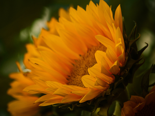 October in The Flower Garden