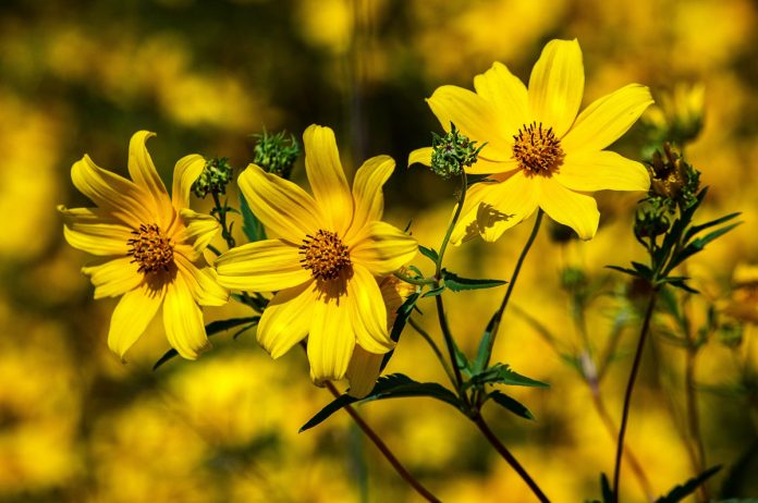 Tips to Plant a Thriving Flower Garden
