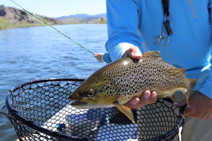 The Types of Trout Native to North America