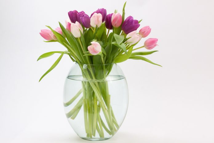 How to Cut Flowers for Display
