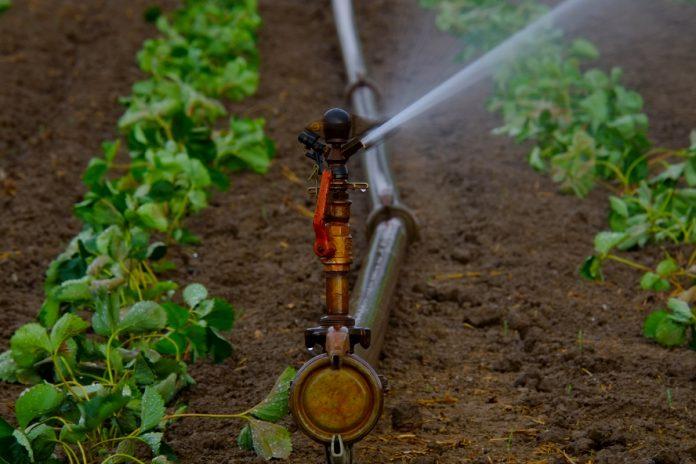 How to Start a Garden - Irrigation Tips